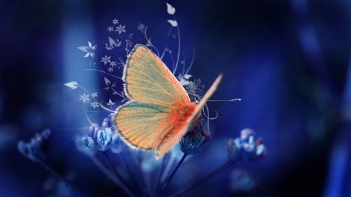 Butterflies, Spiritual Messengers Who Try to Send You a Message! 2