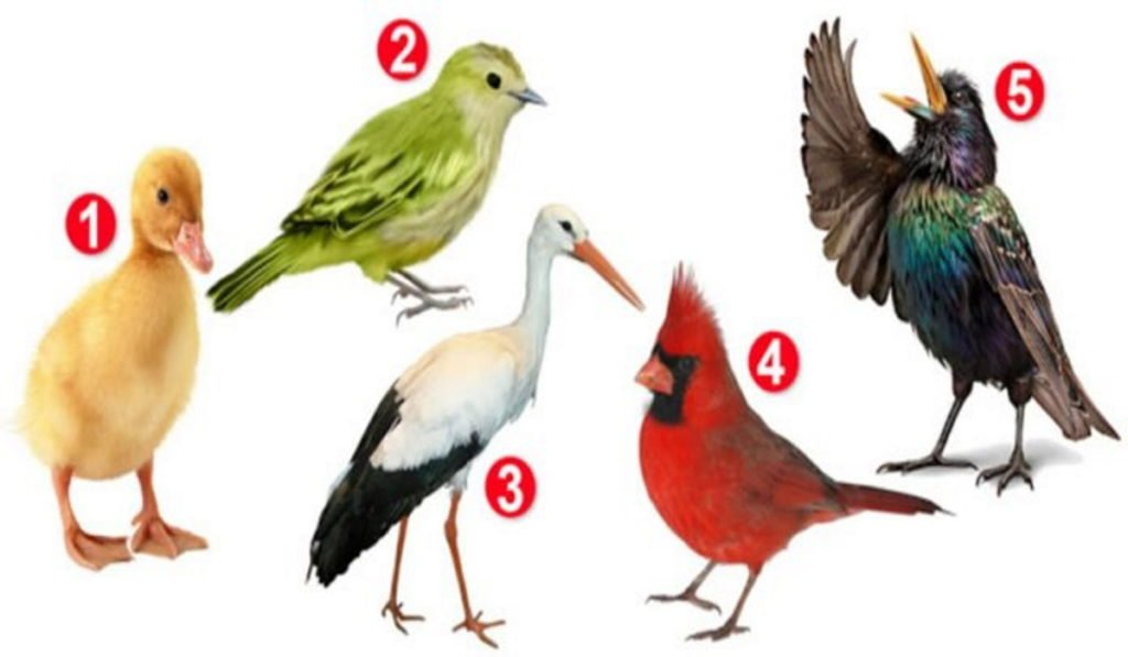 Choose a Bird and Discover Something Interesting About Your Personality